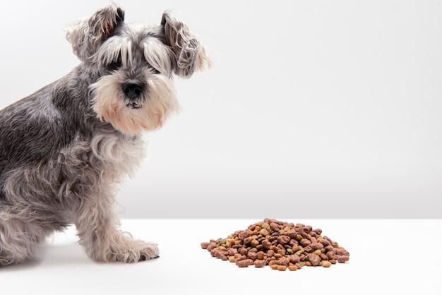 흰색 배경으로 개밥을 먹는 미니어처 슈나우저 개