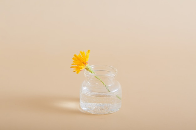 Miniature yellow wildflower in a glass bottle on a solid background