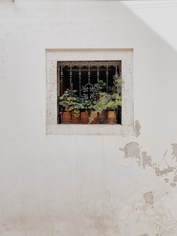 Minimal architecture concept. little square window with iron grade and clay pots with green plants on white building.