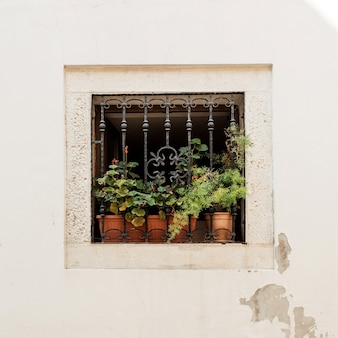 Minimal architecture concept. little square window with iron grade and clay pots with green plants on white building