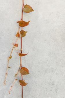 Minimal arrangement of natural plant