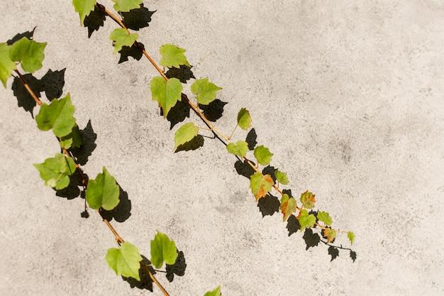 Minimal assortment of natural plant