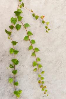 天然植物の最小限の品揃え