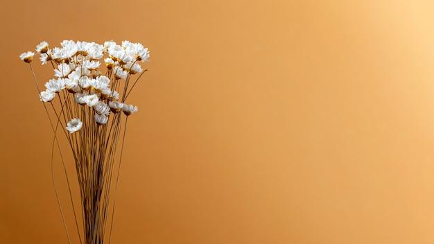 Composizione minima di pianta naturale su uno sfondo monocromatico