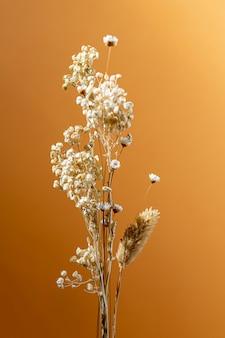Минимальная композиция натурального растения на однотонном фоне