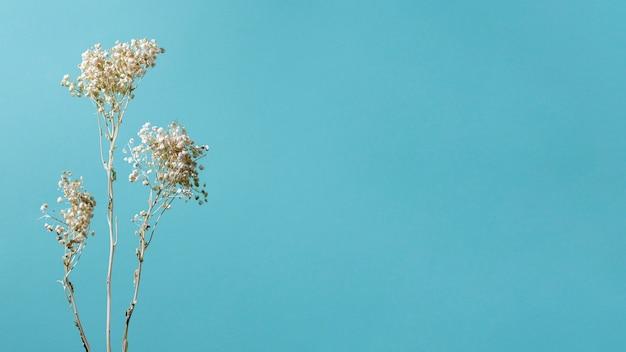 単色の背景にある天然植物の最小限の組成