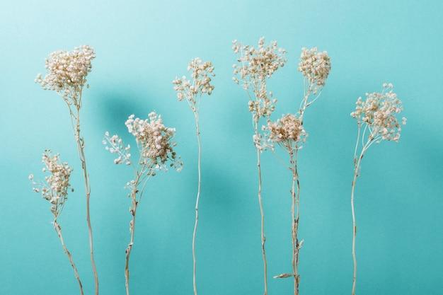 단색 배경에 천연 식물의 최소 구성