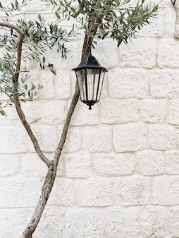 最小限のコンセプト。白い石の壁にヴィンテージのランタンと孤独なオリーブの木。