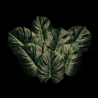 Minimal design foliage rainforest exotic and monstera leaves. nature concept. floral greeting card.