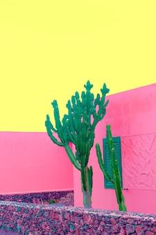 ピンクのデザインの最小限のファッション植物。サボテンカナリア諸島