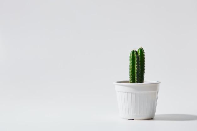 白い背景で隔離の鍋に最小限の緑のサボテン