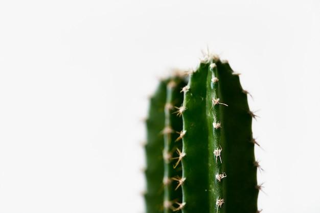 Минимальный зеленый кактус в горшке, изолированные на белом фоне