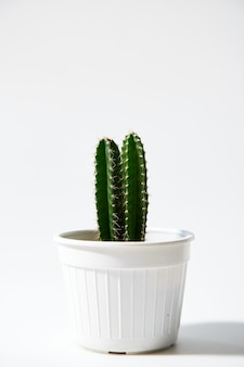 Minimal green cactus in pot isolated on white background