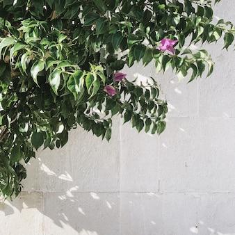 Минимальная концепция зелени. красивое экзотическое зеленое растение на белой стене