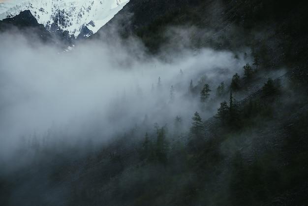 急斜面の針葉樹に囲まれた雲の少ない最小限の山の風景。低い雲の中にもみのてっぺんがある山腹のミニマリストの高山の風景。山の霧の中の木のシルエット。