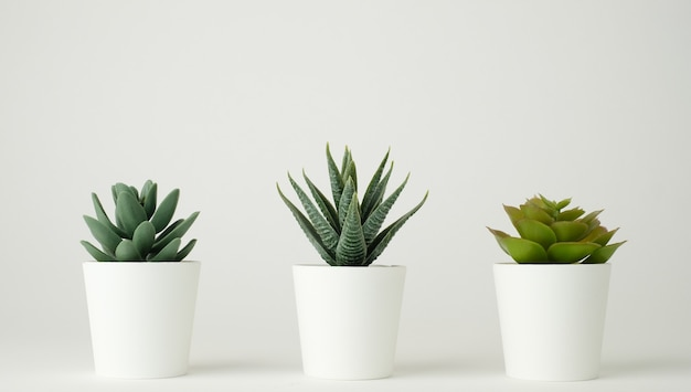 장식 및 조롱을위한 최소한의 식물 냄비.
