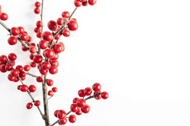Minimal seasonal composition. pattern of branch with red berries on isolated white