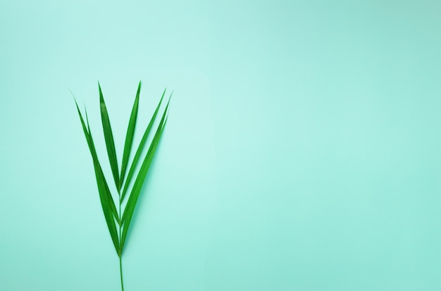 Minimal summer concept. top view green leaf on punchy pastel paper. tropical palm leaves on blue background.