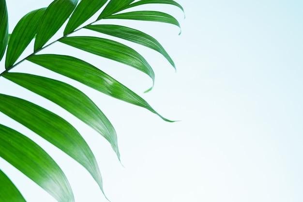 Minimal summer exotic tropical concept background with copy space.