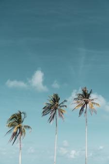 하늘 배경으로 여름에 최소한의 열 대 코코넛 야자 나무.