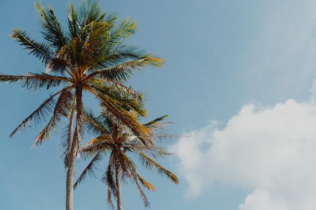 空を背景に夏の最小限の熱帯ココナッツヤシの木。