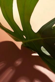 최소한의 열대 잎 배열