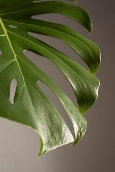 Minimal tropical leaf arrangement