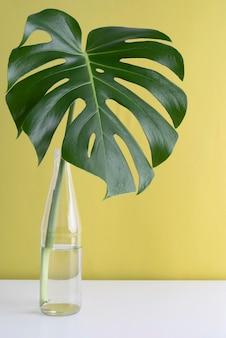 Assortimento minimo di foglie tropicali