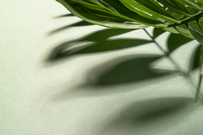 최소한의 열대 식물 구성
