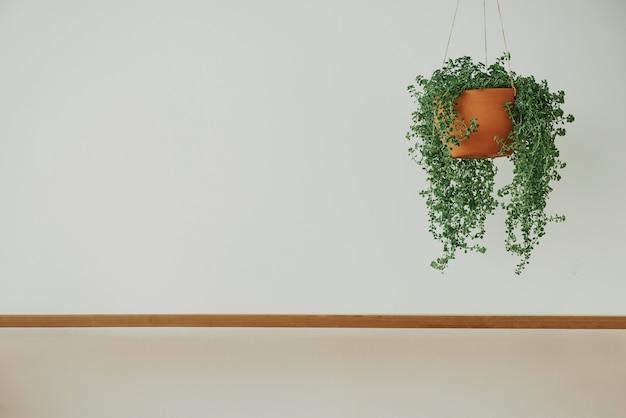 天使のつる植物と木製の棚のある最小限の壁
