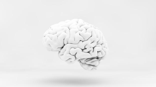 3d 렌더링에서 최소 백색 두뇌