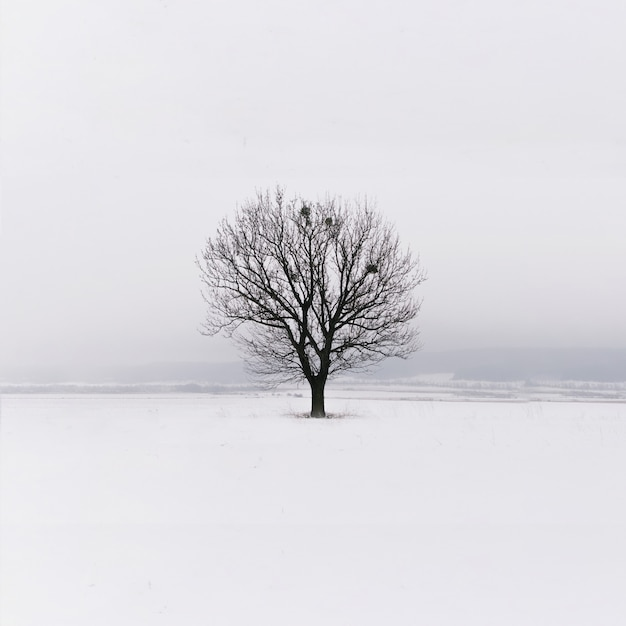 Minimalism. lonely tree in the field. winter