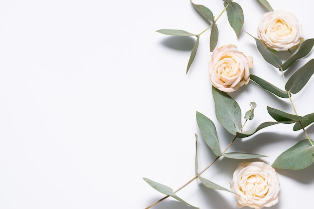 Minimalism style composition. flowers border made with eucalyptus twig and beautiful rose flowers
