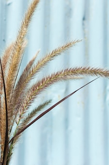 Minimalist arrangement of natural plant
