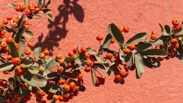自然植物のミニマリストの配置