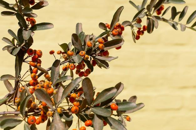 Minimalist assortment of natural plant