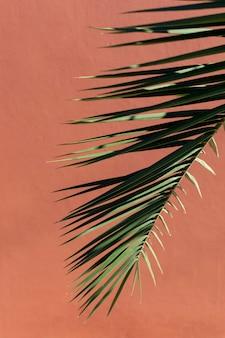 単色の背景に自然植物のミニマリストの品揃え