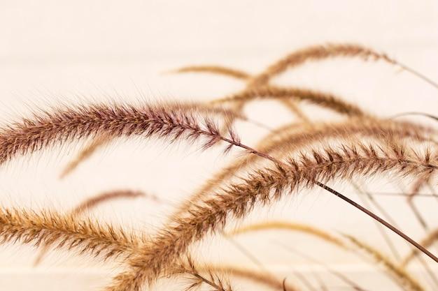 Минималистичный ассортимент натуральных растений