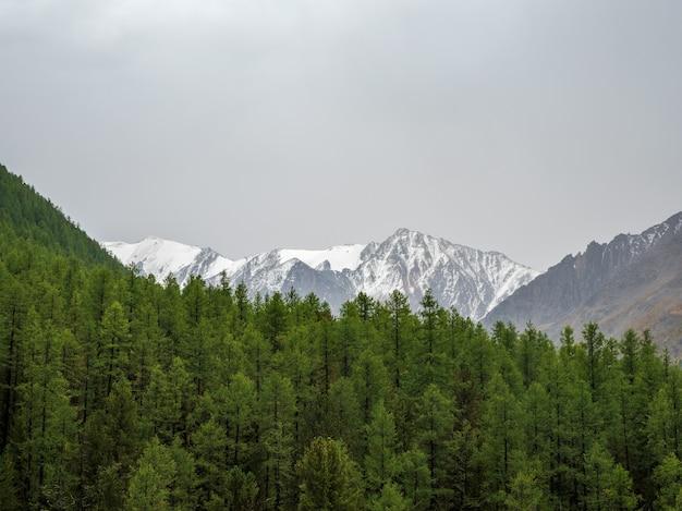 고산 녹색 숲 위에 큰 눈 덮인 산 정상이 있는 미니멀한 분위기의 산 풍경. 바위에 빙하가 있는 멋진 최소한의 풍경.
