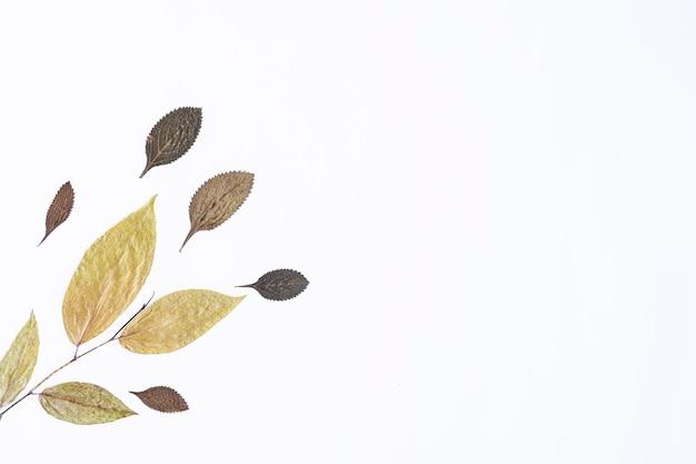 미니멀한 가을 컨셉입니다. 흰 종이 배경에 고립 된 말린된 잎
