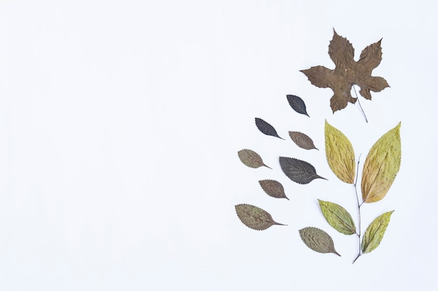 ミニマリストの秋のコンセプト。ホワイトペーパーの背景に分離された乾燥葉