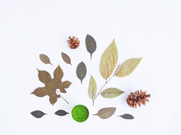 ミニマリストの秋のコンセプト。乾燥した葉、白い紙の背景に分離された松の花