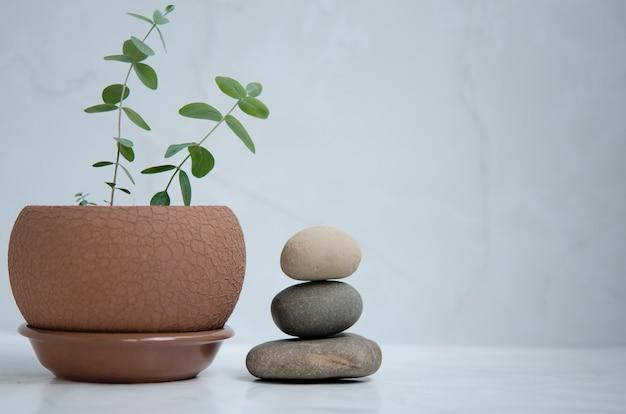 Minimalist balance in interior concept copy space