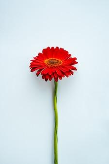 파란색 바탕에 빨간색 거베라 꽃과 미니멀리스트 배너