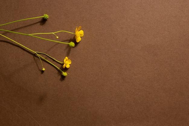 天然素材の石と黄色い花の抽象画を使用したミニマリストのベージュブラウンの静物画...