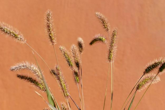 Composizione minimalista di pianta naturale su uno sfondo monocromatico