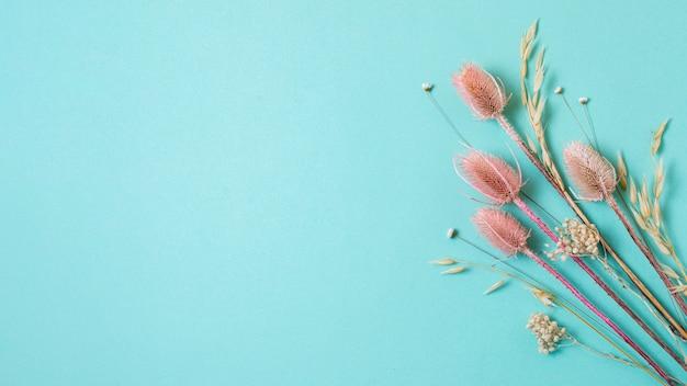 Минималистичная композиция из натурального растения на однотонном фоне