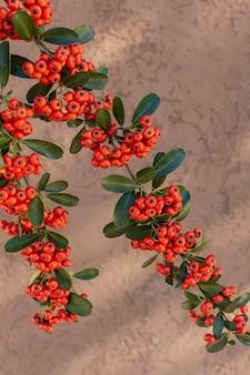 単色の背景に自然植物のミニマリストの構成