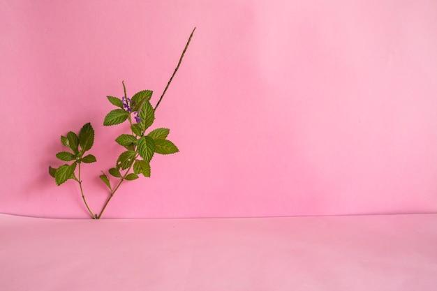 미니멀리즘 개념 아이디어입니다. 분홍색 배경에 녹색 잎