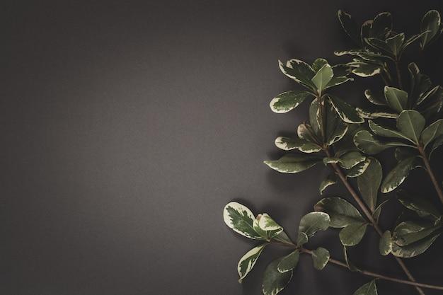 Минималистичная плоская планировка. веточка с листьями на сером фоне. скопируйте пространство слева. виньетирование.